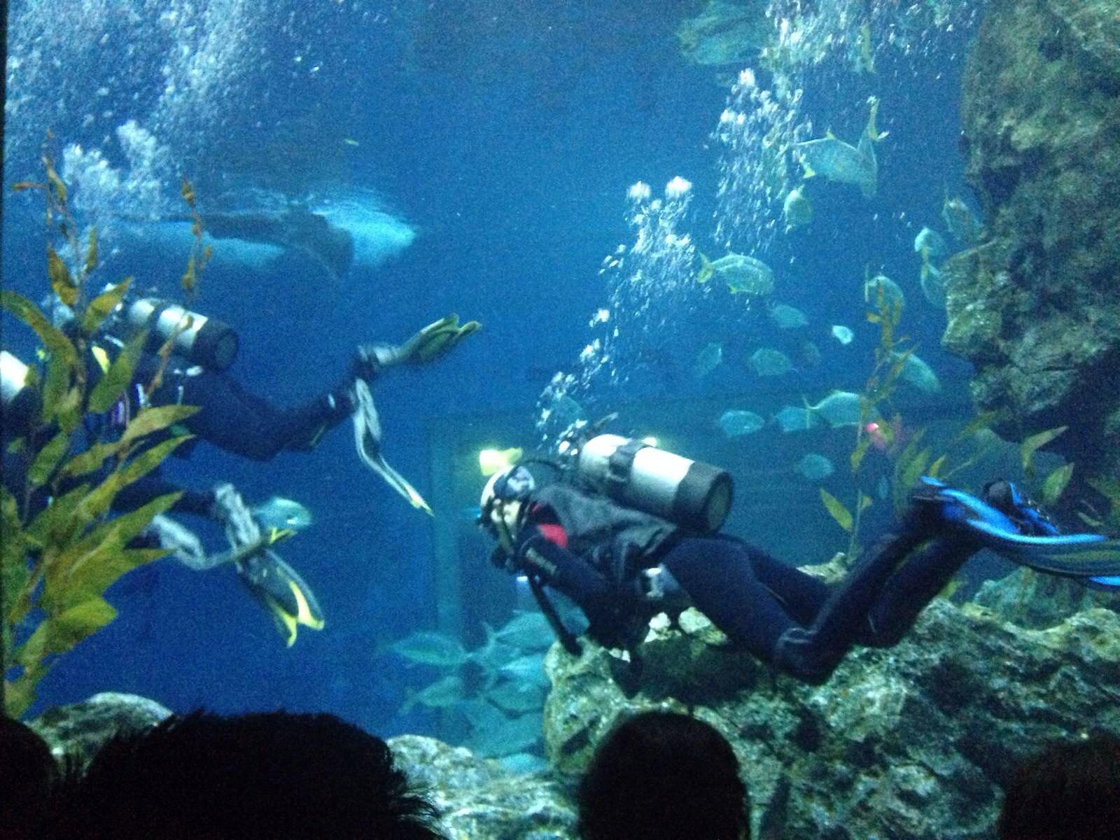 曼谷暹羅海洋世界  Sea Life Bangkok Ocean World   -1