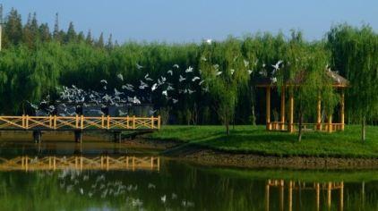 明珠湖 (2)