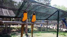 神雕山野生动物自然保护区
