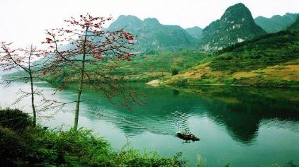 红水河木棉花