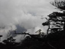 神农顶风景区-神农架-M12****955