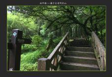 阿里山国家风景区-嘉义-风云花草
