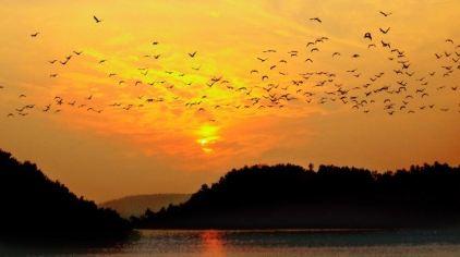 漳河夕阳飞鸟